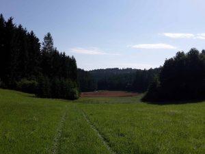 Waldspaziergang - Zeckenschutz