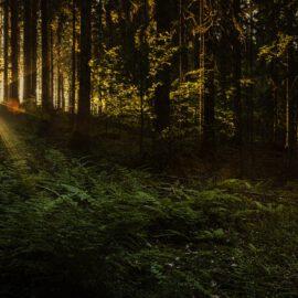 Wandern im Murgtal – Den Schwarzwald live erleben